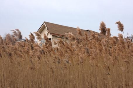Een huis uit Kissam Avenue, verdwaald in het moeras