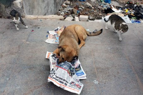 Reading the paper for the Cats