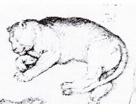 Dürers leeuwin