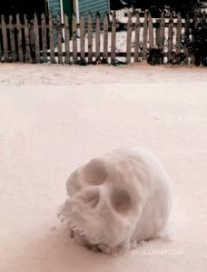 31 snowskull