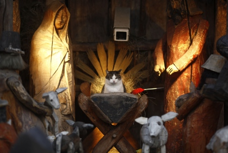 A cat sits at the nativity scene outside a church in Warsaw December 26, 2012. REUTERS/Kacper Pempel (POLAND - Tags: ANIMALS TPX IMAGES OF THE DAY RELIGION SOCIETY) - RTR3BWX1